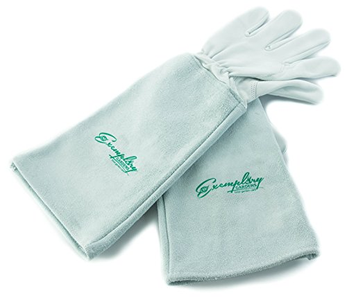 Rose Pruning Gloves for Men and...
